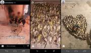 انتشار تصاویر شکار غیرمجاز کار دست شکارچی داد