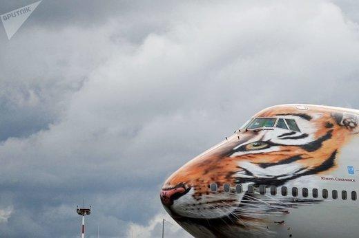 هواپیمای بوئینگ 747-400 روسیه با لباس ویژه ببر