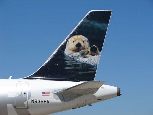 هواپیمایی با نقاشی سمور متعلق به شرکت هواپیمایی فرانتیر ایرلاینز آمریکا