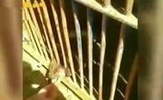 فیلم | ضجه توله خرس گرسنه در باغ وحش شیراز