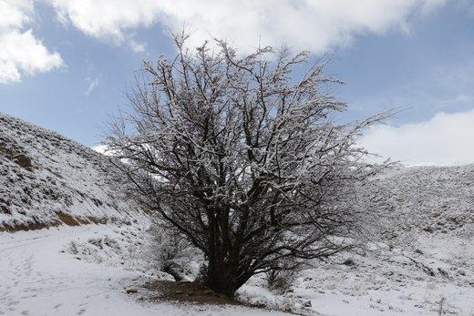 اولین برف پاییزی در طبیعت زیوه
