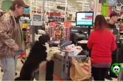 فیلم | سگی که هر روز برای خرید به فروشگاه میرود!