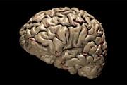 فیلم | خاطرات جدید، اطلاعات مغز انسان را پاک میکند