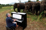 تصاویر | نواختن پیانو برای فیلهای مسن تایلندی