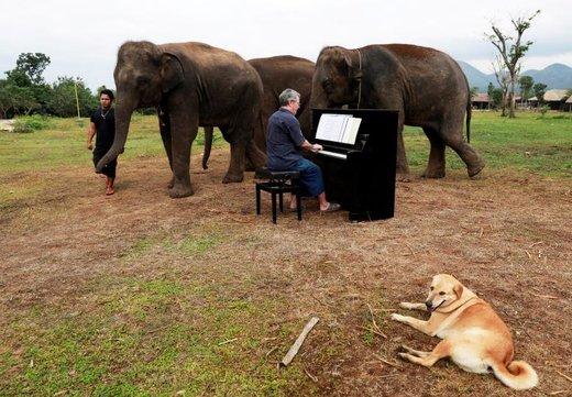 پل بارتون، هنرمند و پیانیست انگلیسی، برای فیل های نابینا و مسن در پناهگاهی در تایلند پیانو می نوازد