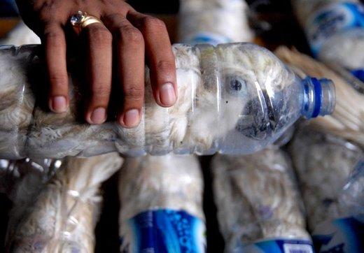 کشف قاچاق طوطیکاکلی کاکلزری با بطری آب در اندونزی