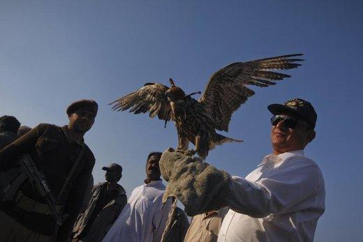 کشف قاچاق شاهین در پاکستان