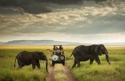 عکس | عبور از میان فیلها در عکس روز نشنال جئوگرافیک