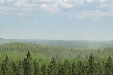 تبدیل گازهای ارگانیک اتمسفر به ذرات معلق به دلیل آلودگی هوا توسط انسان
