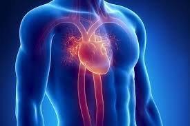 امکان خودترمیمی قلب بیمار با یک پروتئین