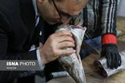تصاویر | گشت تعزیرات شب یلدا در ماهیفروشیهای سرچشمه