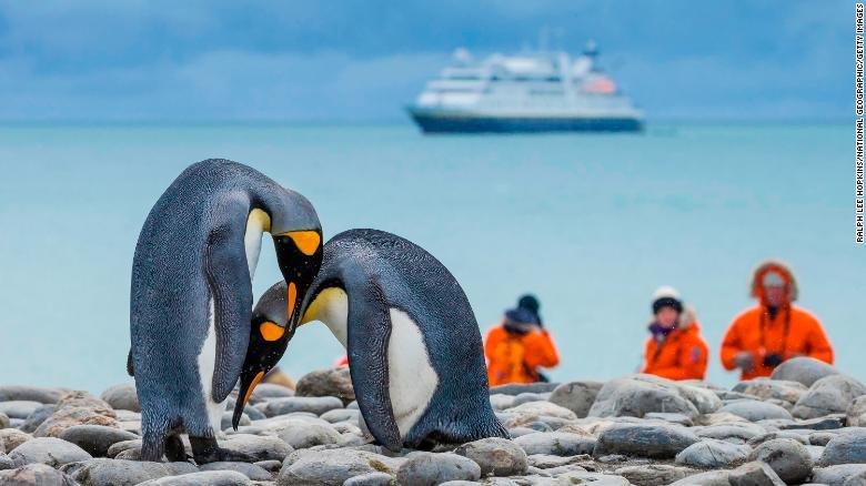به خطر افتادن جان پنگوئنهای قطب جنوب با باکتریهای انسانی