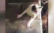 فیلم | تلاش تحسینبرانگیز یک عابر برای نجات گربه بیچاره