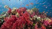 رنگ سال ۲۰۱۹/ رنگ مرجانی از کجا آمده؟