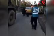 فیلم | بستن یک سگ به تاکسی بیاعتنا به فریادهای مردم! (۱۶+)