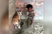 فیلم | سگ مادر برای مراقبت از تولههایش شوخی ندارد