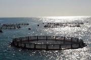 بندرلنگه به قطب پرورش آبزیان در کشور تبدیل می شود