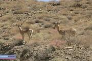 راهاندازی شکارگاههای مصنوعی در استان اردبیل