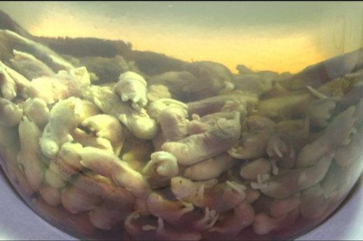 فیلم | موزه غذاهای تهوعآور، با کیسه وارد شوید!