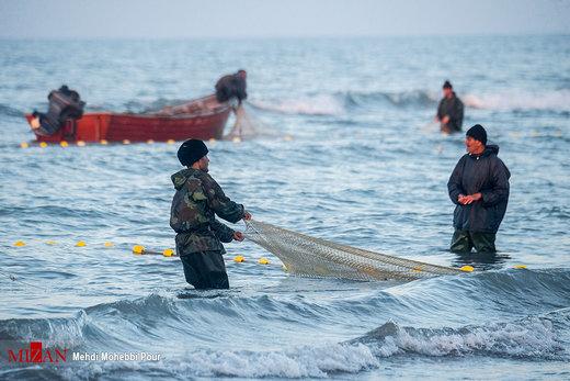 برگزاری نشست ارزیابی ذخایر ماهیان استخوانی دریای خزر در اداره کل شیلات گلستان