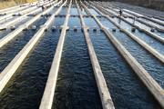 ايران تحتل المركز الاول عالميا في إنتاج أسماك السلمون المرقط