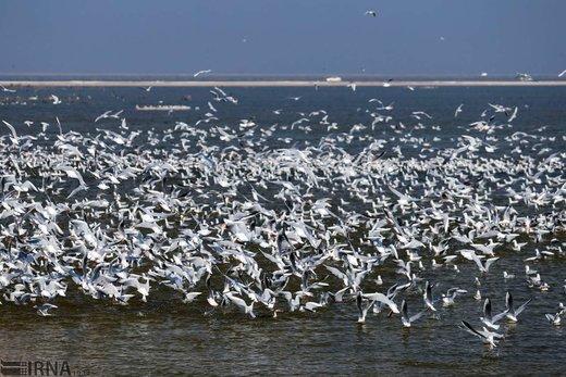 تالاب بین المللی هورالعظیم میزبان پرندگان مهاجر