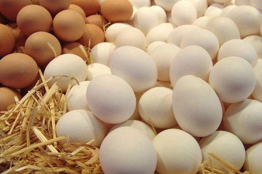 تخم مرغ روی ارزانی را نمیبیند/ تولیدکنندگان: قیمتها باز هم پایین است!