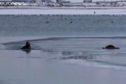 فیلم | نجات یک سگ از دریاچه یخزده وان ترکیه