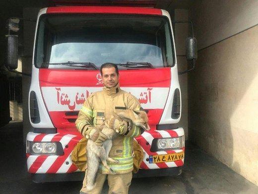 یک اتفاق عجیب در کرج: روباه زخمی به آدمها پناه برد