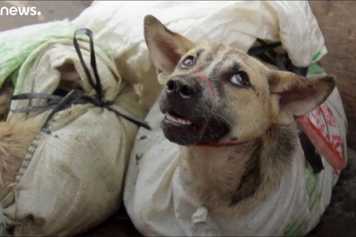 مجازات مزاحمت از طریق سگگردانی چیست؟/ اظهارات دادستان تهران