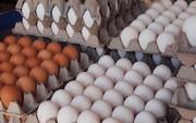 کاهش قیمت تخممرغ در مرغداریها/ قیمت تمام شده تخممرغ چقدر است؟