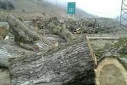 دستگاههای استانی در مسأله قطع درختان ارسباران کوتاهی کردهاند