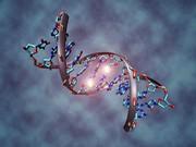 فعالسازی خوشههای بزرگ ژنی با فریب دادن ژنهای خاموش