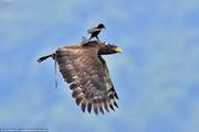 تصاویر | اتفاقی نادر و دیدنی که برای یک عقاب افتاد!