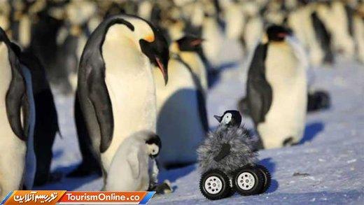 دوربین جاسوسی در دنیای حیوانات