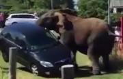 فیلم | حیوانات از آنچه فکر میکنید عصبانیترند!