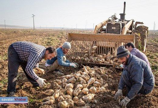 تجلیل از ۴ فعال و بهرهبردار در بخش کشاورزی اردبیل