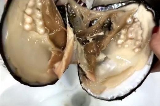 فیلم   لحظه شکافتن یک صدف پر از مروارید را ببینید