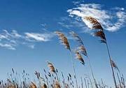 وزش باد گرم در گیلان