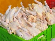 نرخ مرغ ناگهان ۲ هزار تومان افتاد!