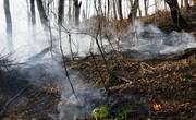 مهار آتشسوزی در زیباترین جنگلهای ایران