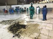 تصاویر | هجوم صدها هزار ملخ به مکه