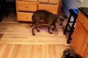فیلم | وقتی سگها هم از اشتباهشان خجالت میکشند