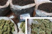 قاچاقچیها در بستههای چای «ماریجوانا» میبردند!
