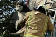 عکس | نجات جان یک سگ از آتشسوزی در کرج
