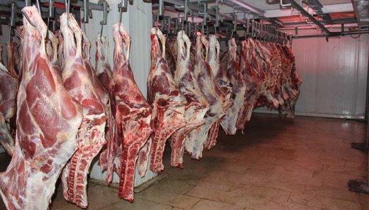 واردات دام زنده از رومانی/ قیمت گوشت کاهش مییابد؟