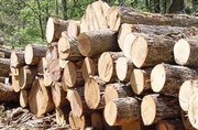 توقف کامیونهای حامل  چوب درخت گز و گردو در محور فولادمحله شهرستان مهدیشهر