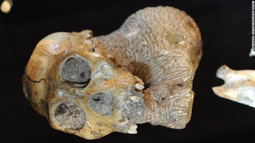 انسان ۲ میلیون سال پیش از درخت آویزان میشده است