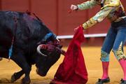 فیلم | دعوای دستهجمعی وسط مسابقه گاو بازی!