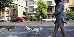 ممنوعیت سگگردانی در تهران